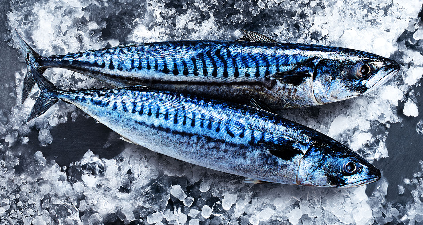 Mackerel00179V2